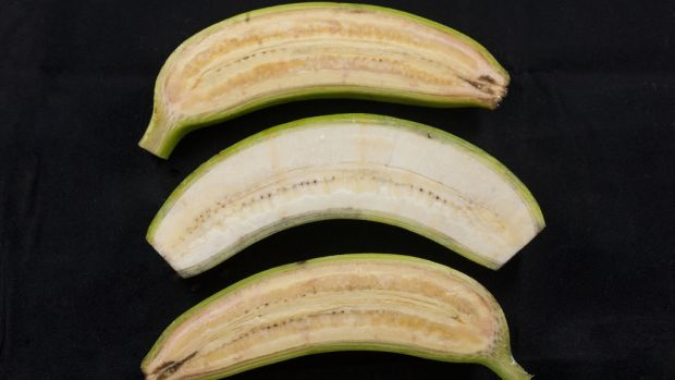 The banana flesh of a pro-vitamin A-enriched banana is orange rather than cream colour.