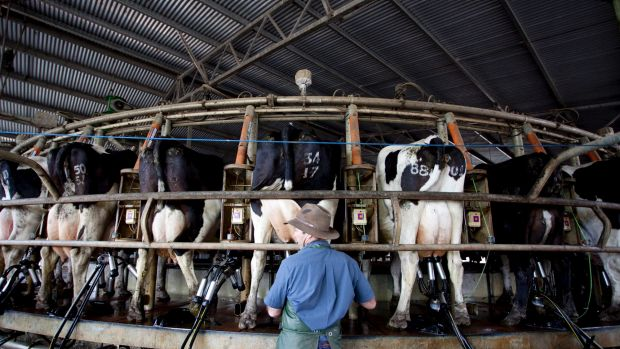 Dairy prices could be under pressure as exporters take steps to make up for the loss of the Russian market.